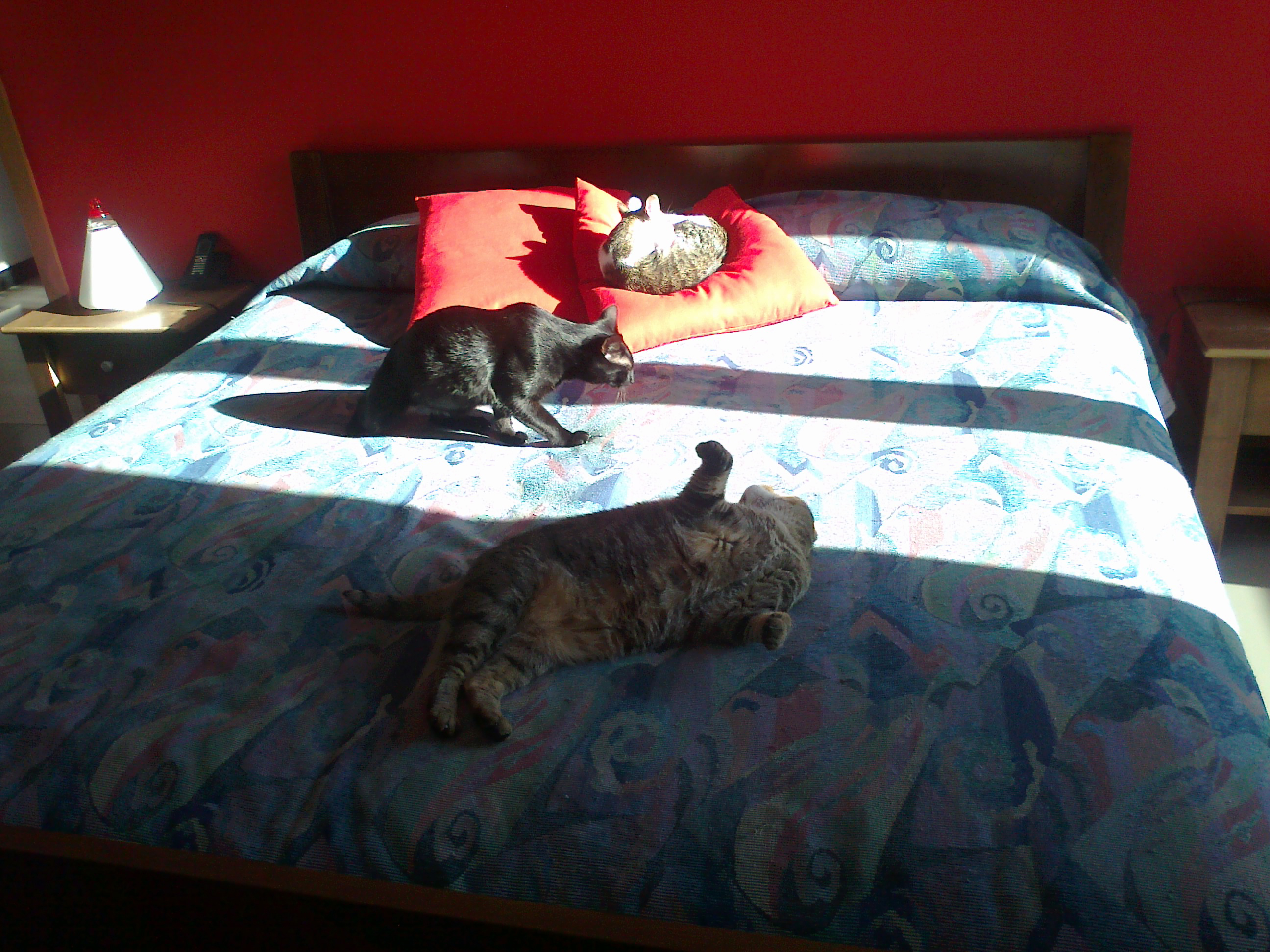 Gatti giochino di ody su anch 39 io - Perche i gatti fanno la pipi sul letto ...